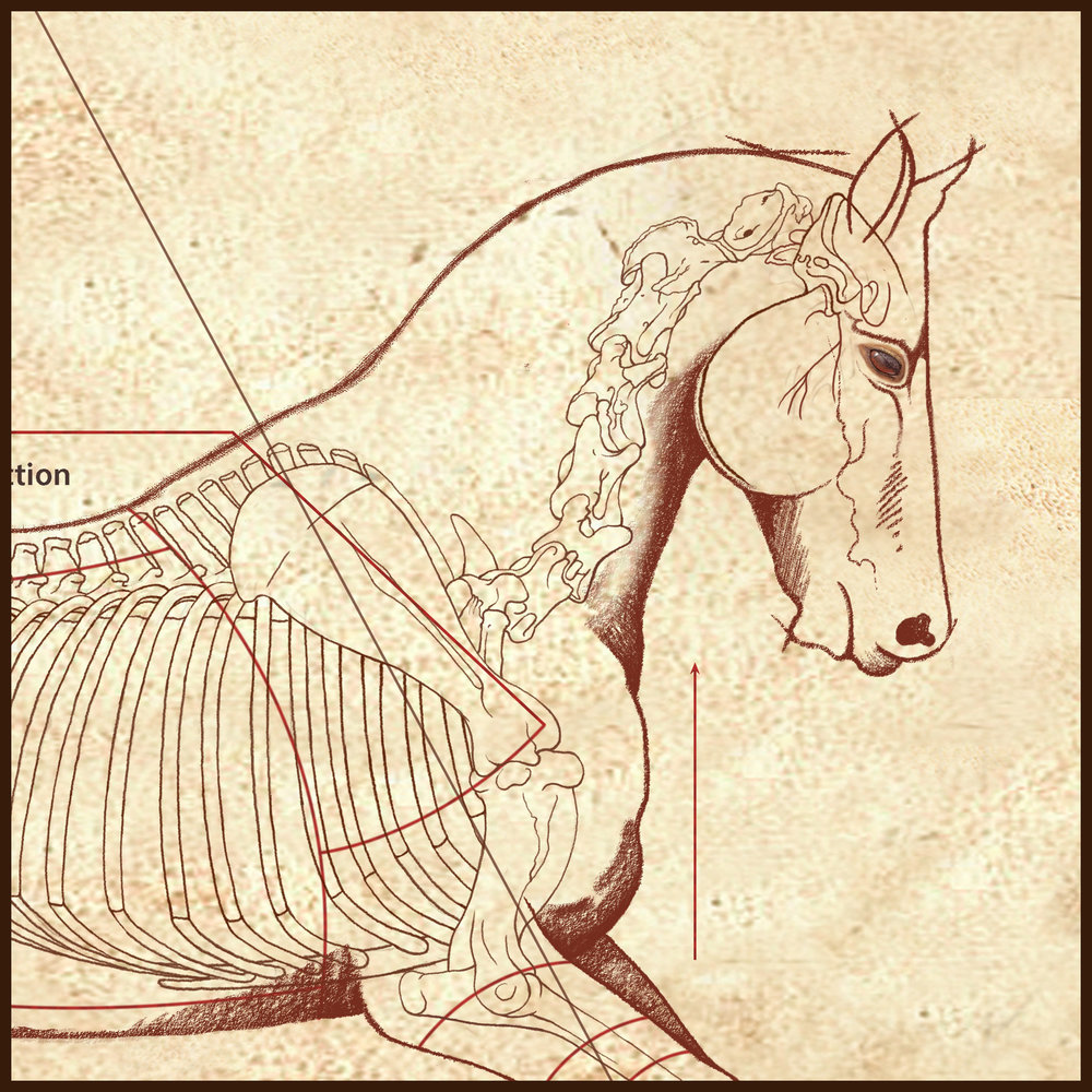 """DaVinci Horse Canter"" by C. Twomey, enlargement"