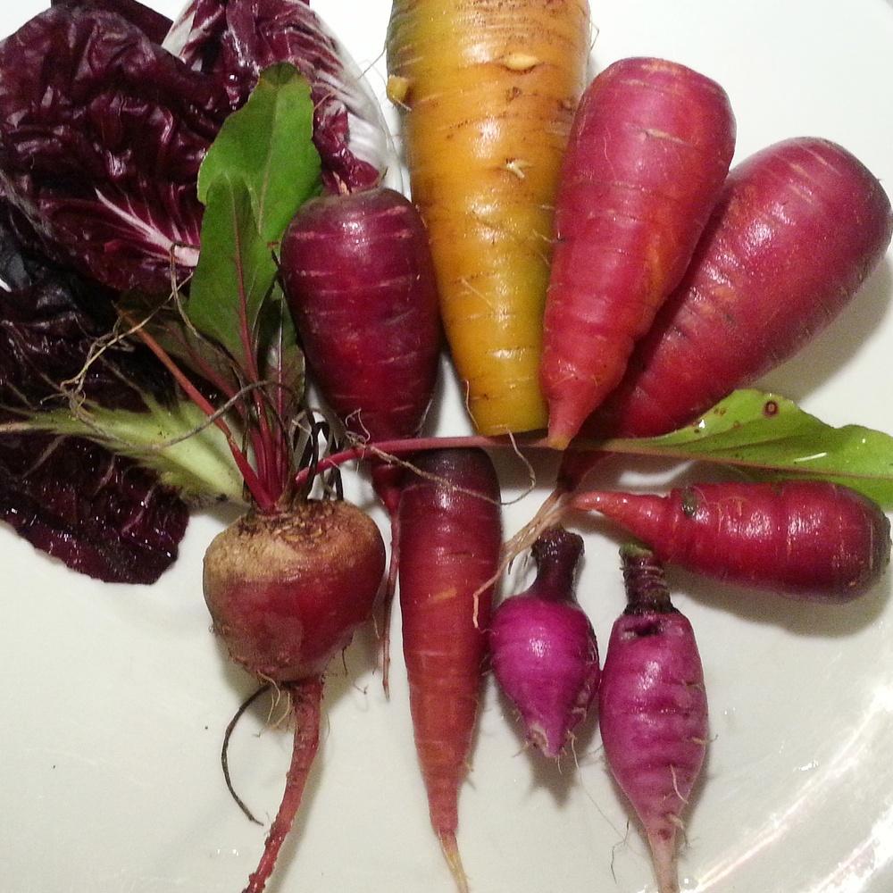 Still life: radicchio, beet, kaleidoscope carrots