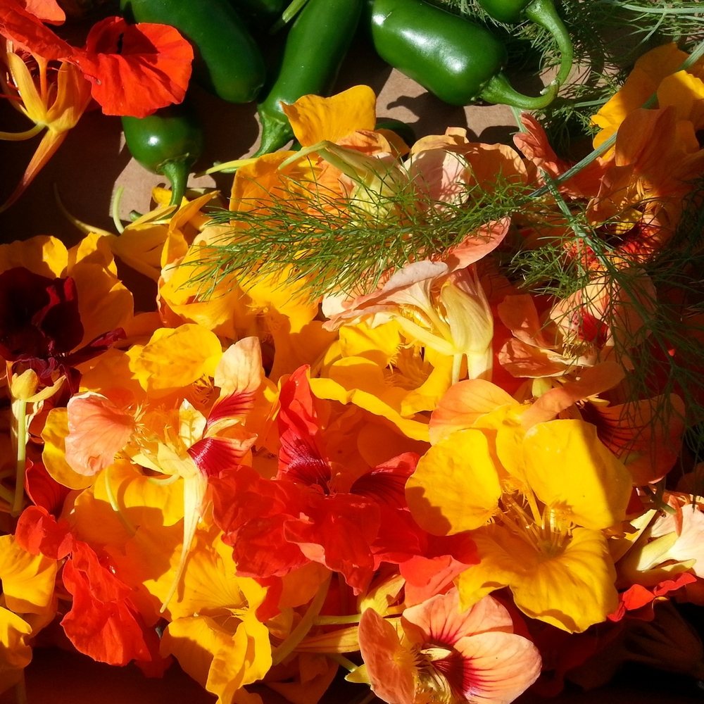 Glowing nasturtiums, dill, and peppers
