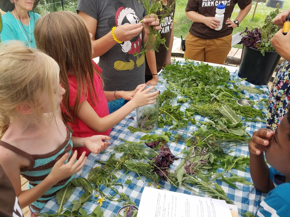 Herb workshop at Nature's Farm Camp in Cornell, Illinois
