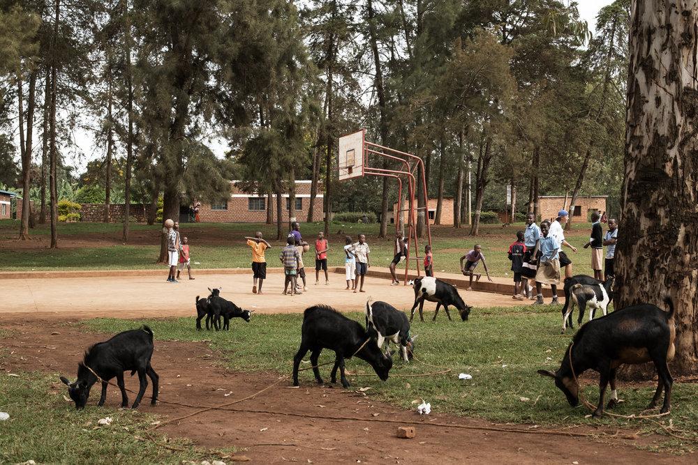 Rwanda_2017-17.jpg