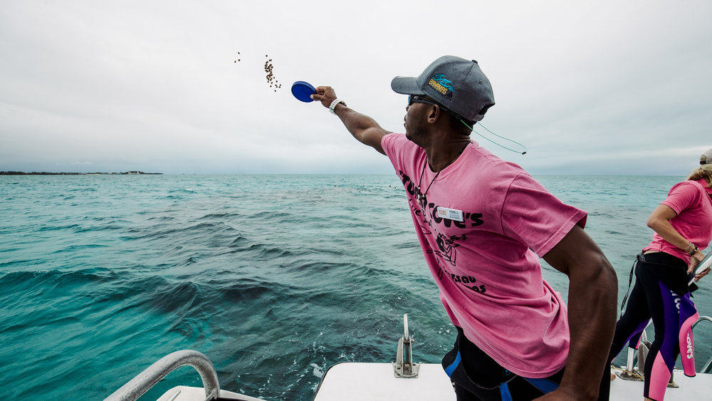Our captain throwing fish food into the water to attract more fish around the reef.
