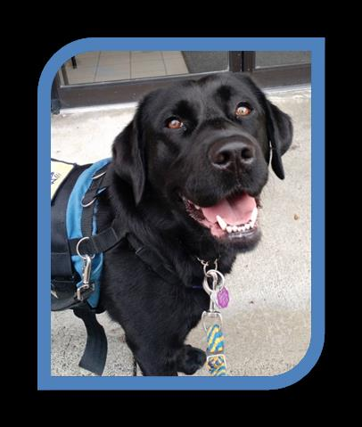 Jaguar (Jag) is joining the New Roots Therapy team in September 2017! Jag, a black labrador, has extensive training and experience working with clients (including children and youth) who are experiencing depression, anxiety, trauma, ASD, and more.  Jag is part of a dynamic duo with Heather Kent, RP(Q), who is a member of our counselling team!