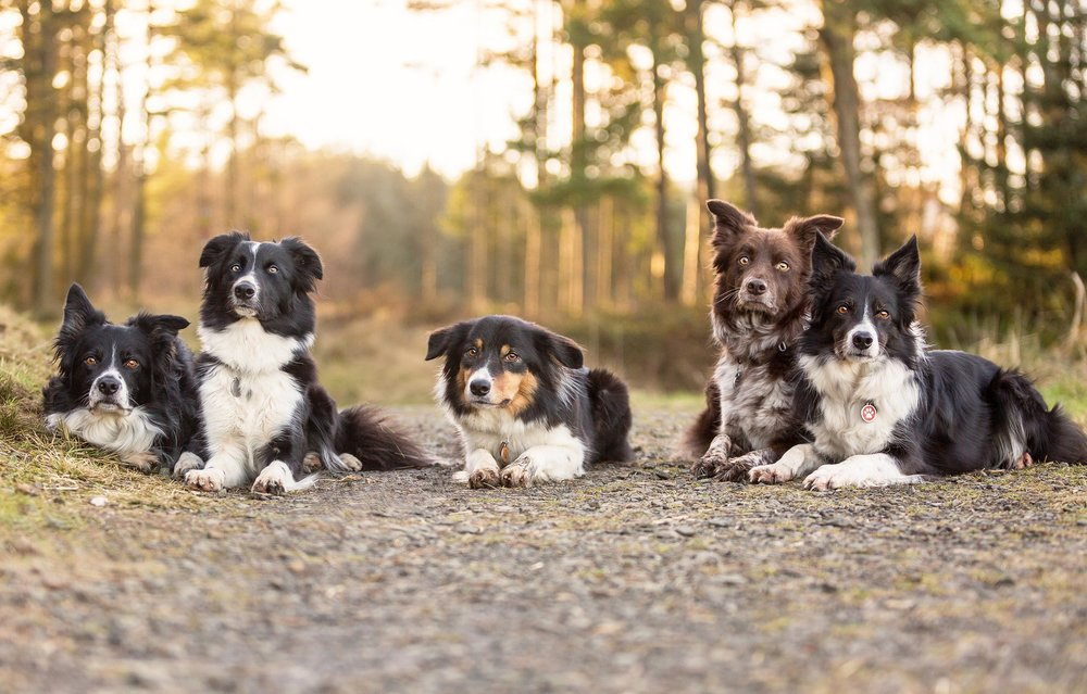 Mutleys-Snaps-on-location-Pet-Photography-Falkirk.jpg