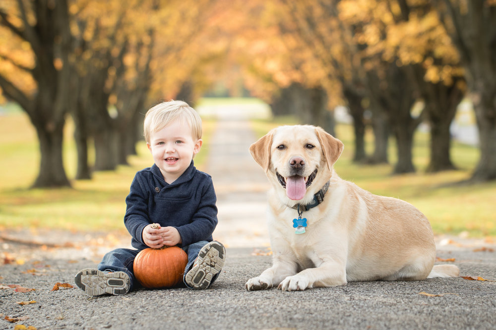 Your dog is part of the family too!