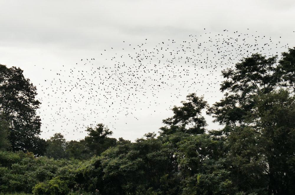 birdsflyaway.jpg
