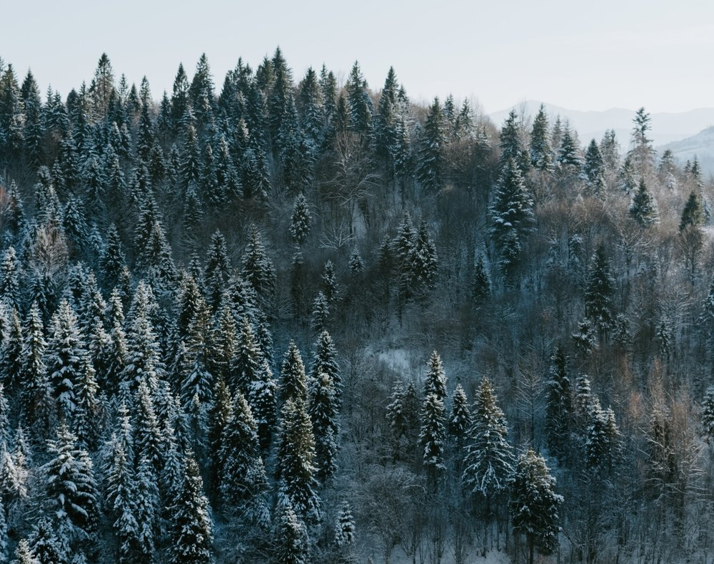 FOREST  An enchanting blend of West coast forest scents: Cedarwood, Juniper Berries, and Pine, with Bergamot to help them all sing in harmony. Refreshing scent.