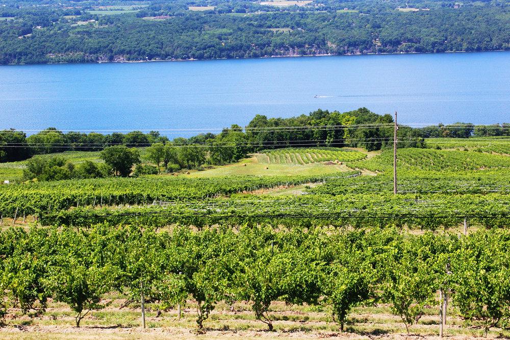 Photo credit Atwater Estate Vineyards
