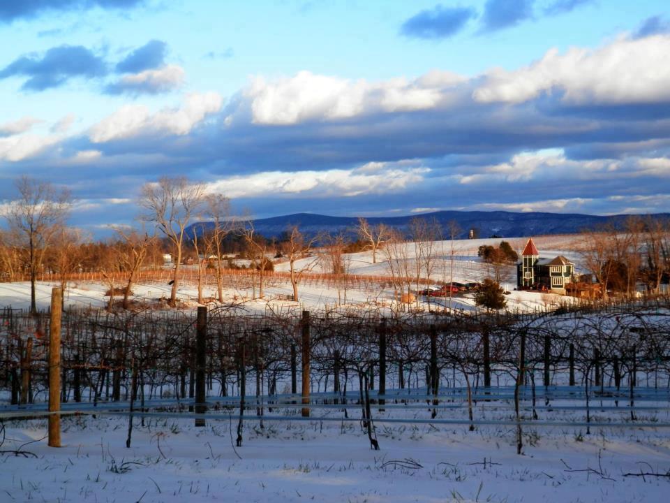 North Mountain Vineyard.jpg