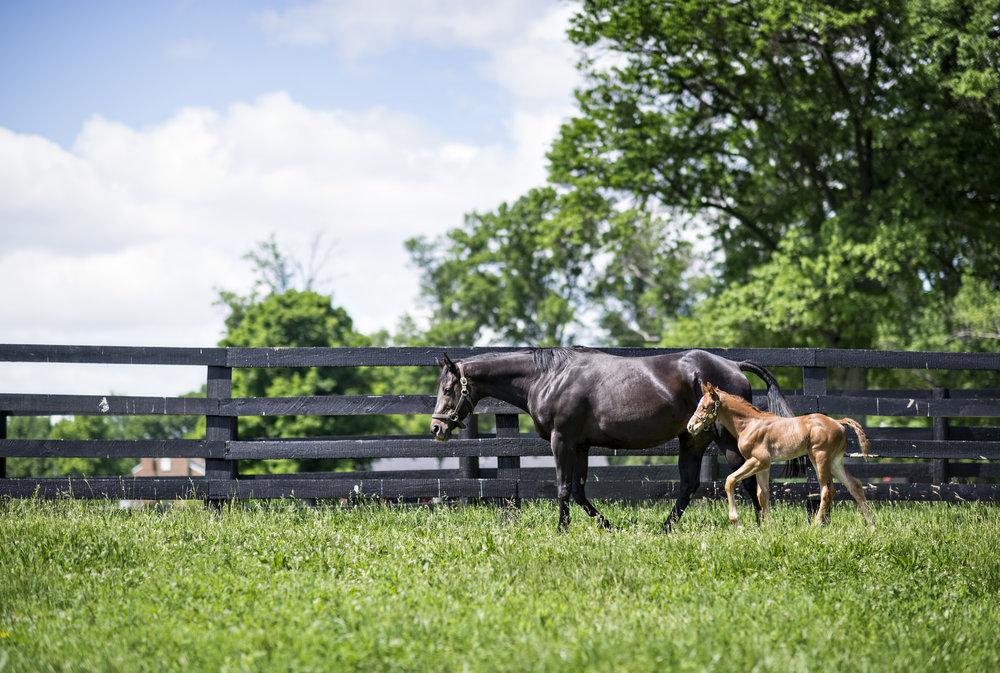 Photo credit Hermitage Farm