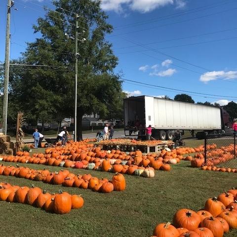 2018 pumpkin sales unloading