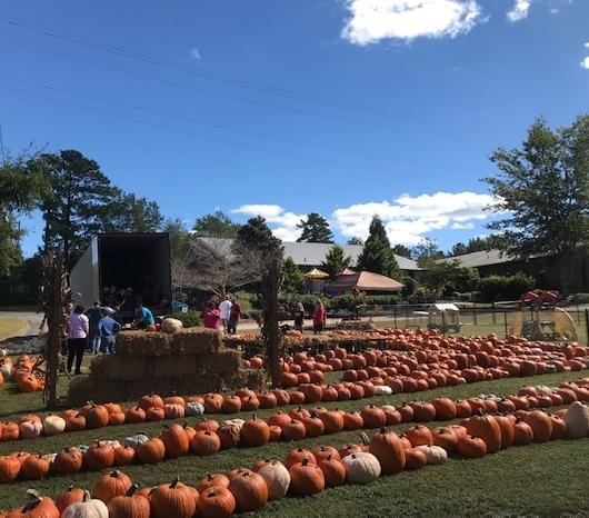 2018 pumpkins set up 1
