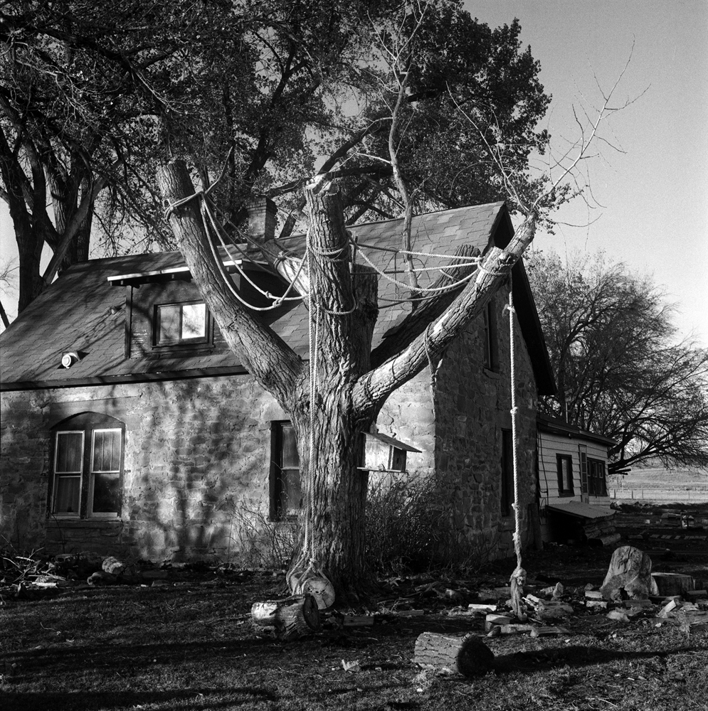 Cottonwood Trunk w- ropes and debris.jpg