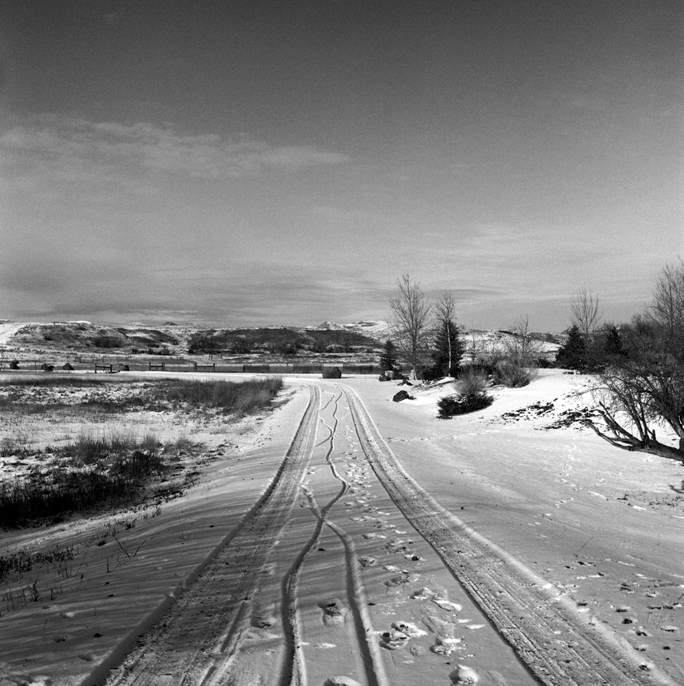 Tracks in the Snow.jpg