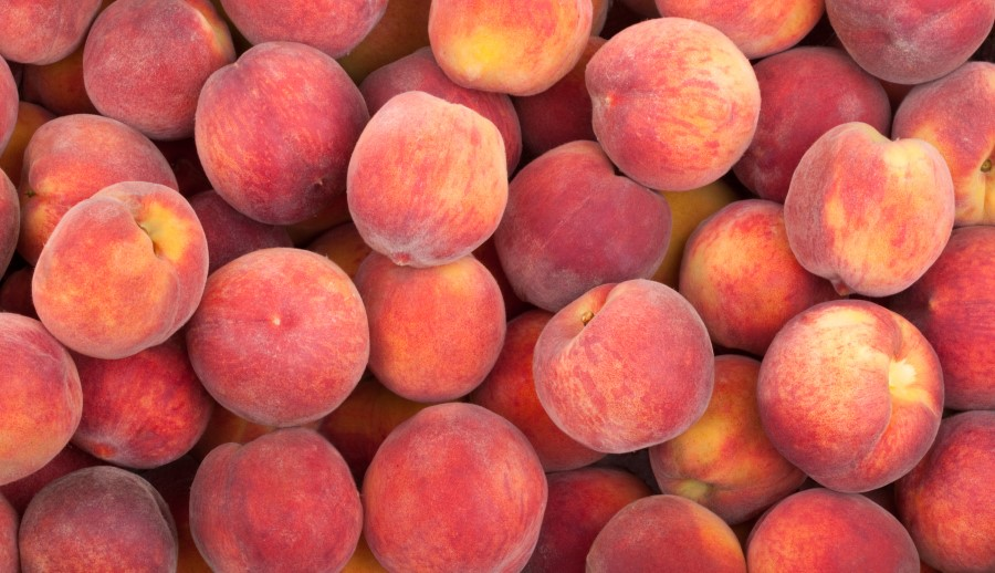 Peaches are ideal foods when picked ripe from the tree. Most store bought peaches are picked hard so they don't damage during shipping.