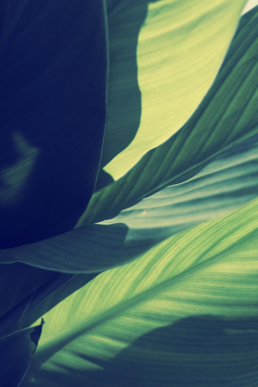 Blumen-3078.jpg