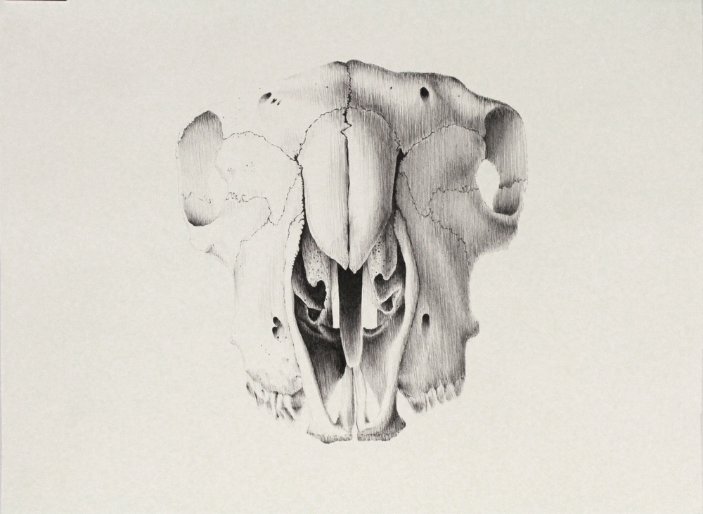 Fine Liner on Paper (56x76cm)
