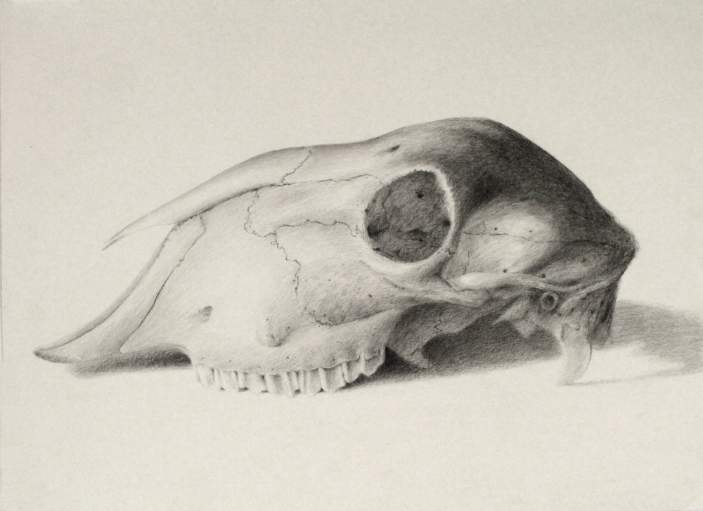 Graphite on Paper (76x56cm) Framed