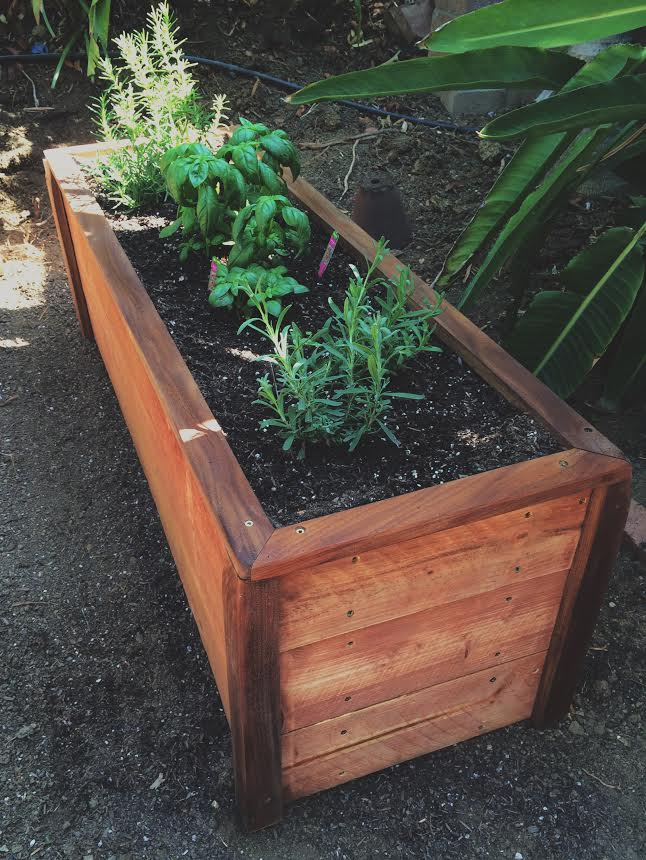 planter_herbs.jpg