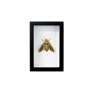 cuadro abeja2.jpg