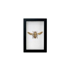 cuadro abeja.jpg