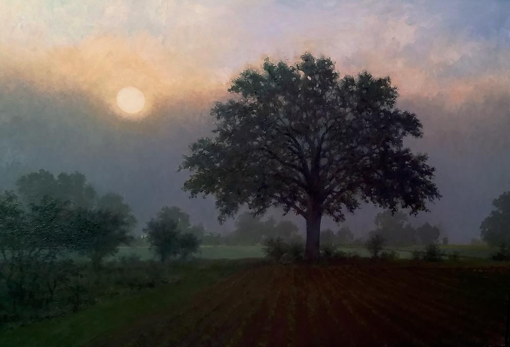 Burr Oak with lifting Fog oil on canvas 27.5 x 18