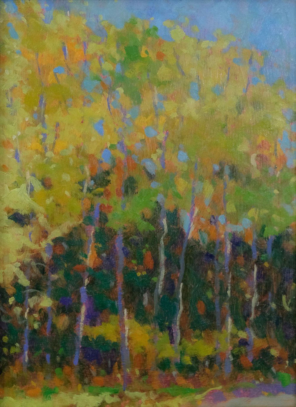 Chris Gargan - Fall Birches