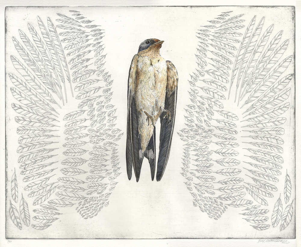 Passerine etching and watercolor 23 x 27 (18 x 22) $650