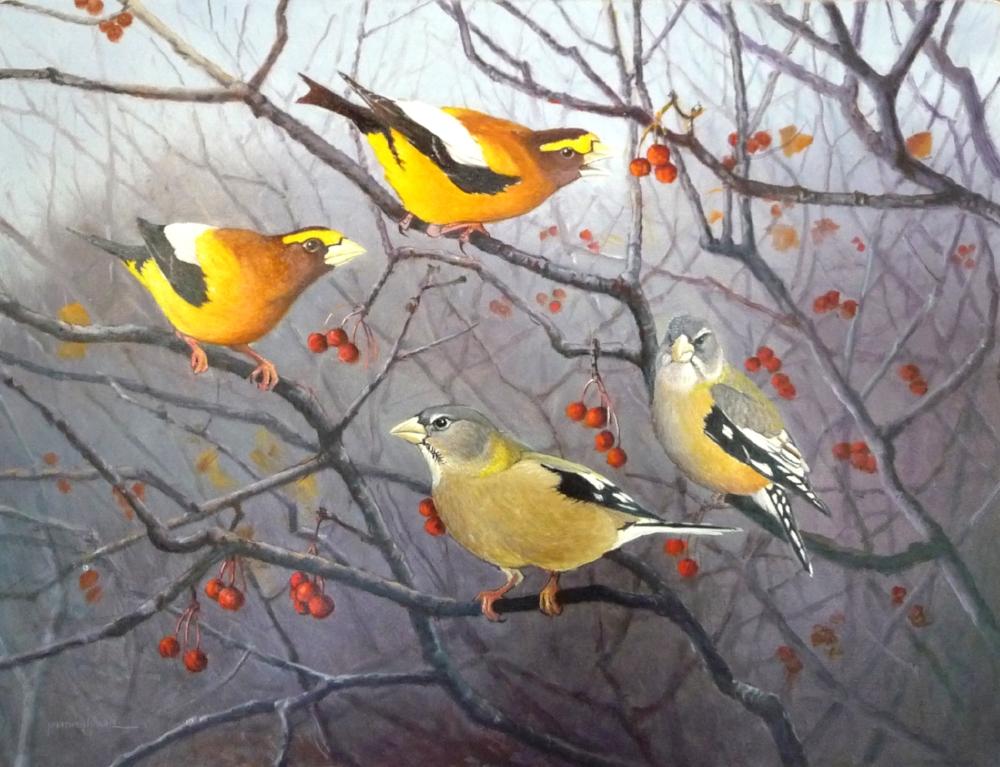 Easy Pickins (Evening Grosbeaks)