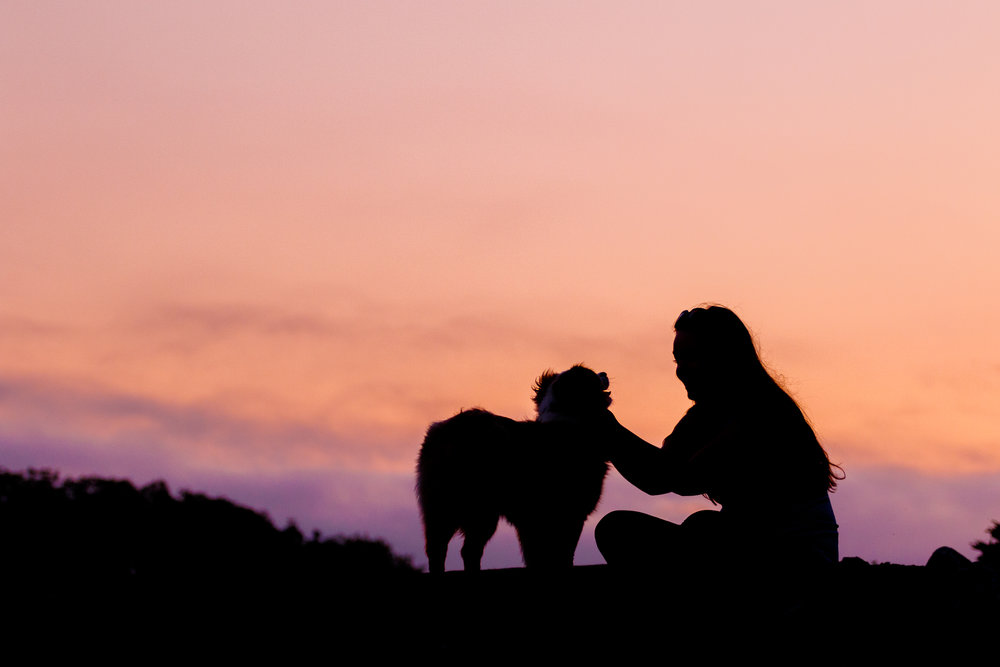 Sunset_pet_photographer_wet_nose_images.jpg