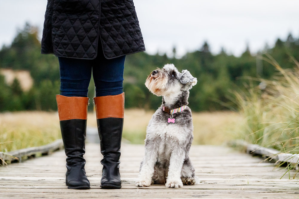 schnauzer_wet_nose_images_photography.jpg