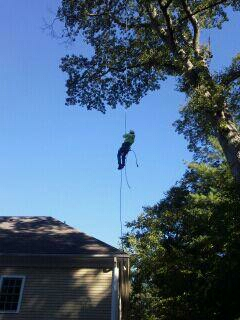Tree removal Fairfield CT
