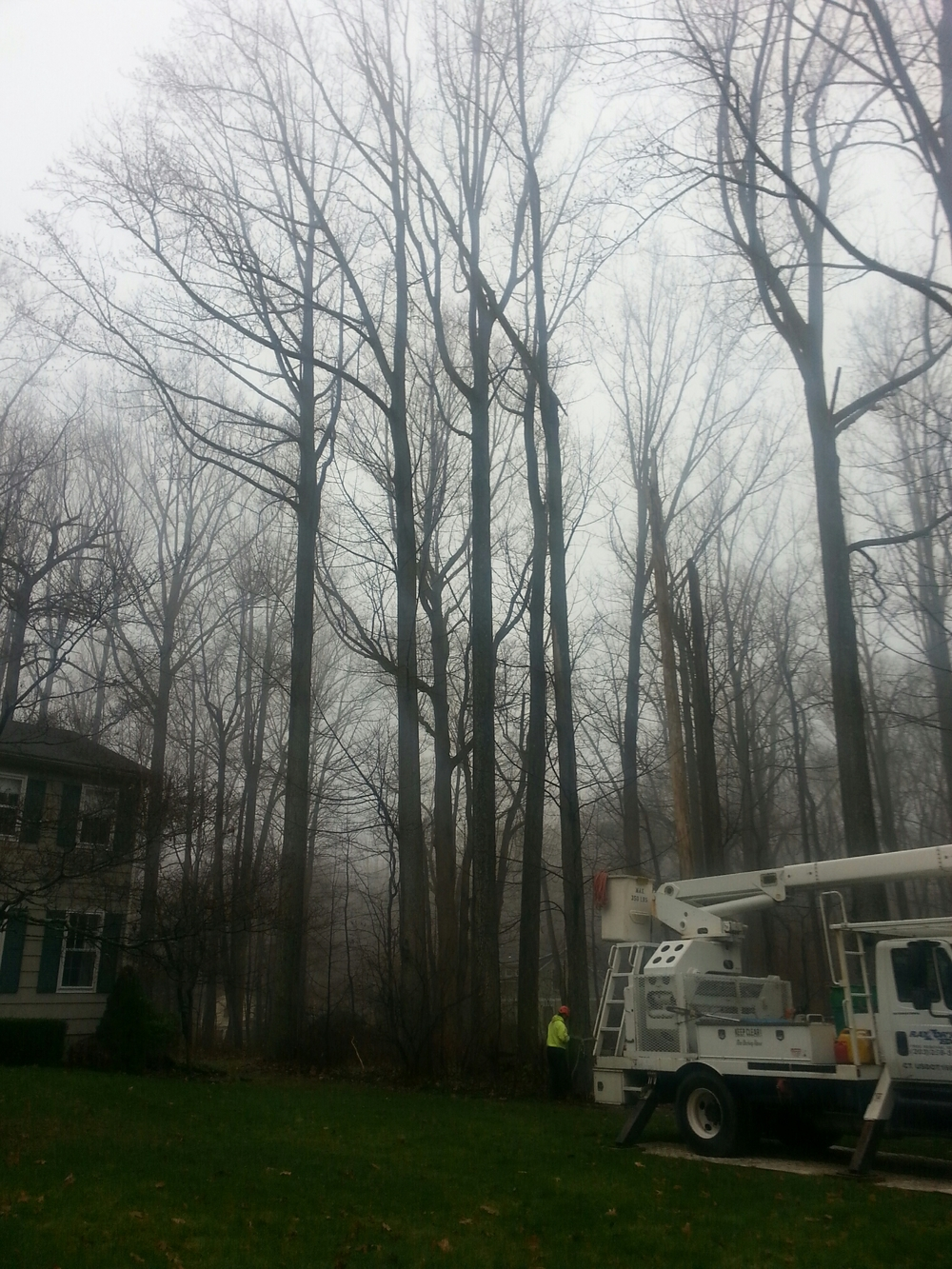 Tree removal Easton CT