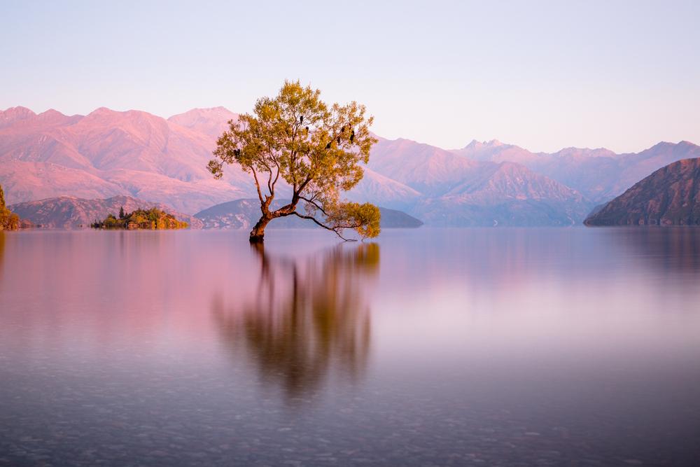 Sunrise by the Wanaka tree, New Zealand