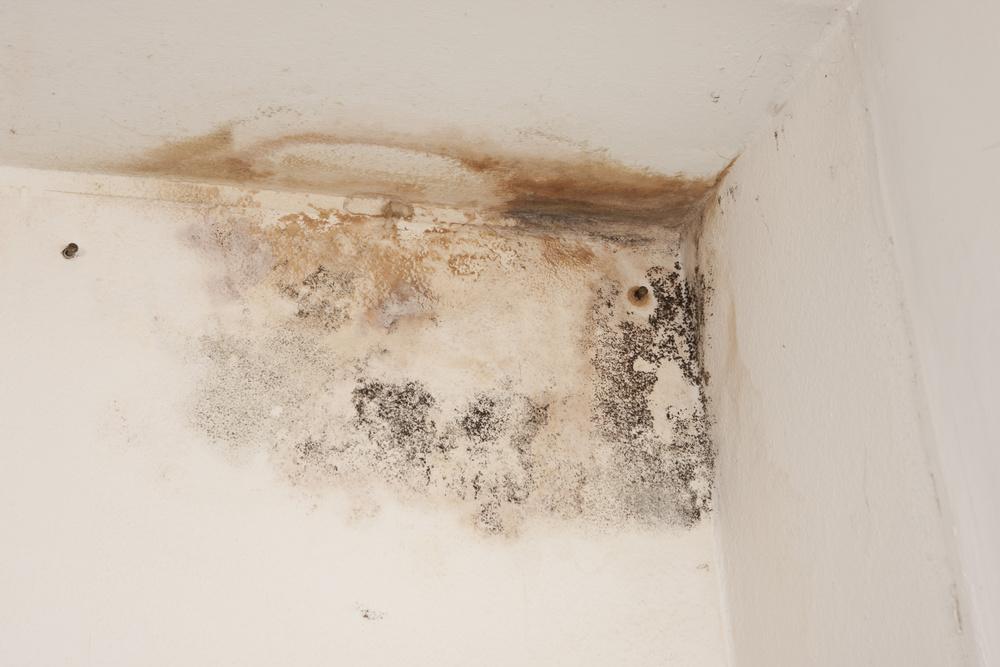 Grande AVANT U0026gt; Symptôme De Problèmes De Condensation Sur Les Murs