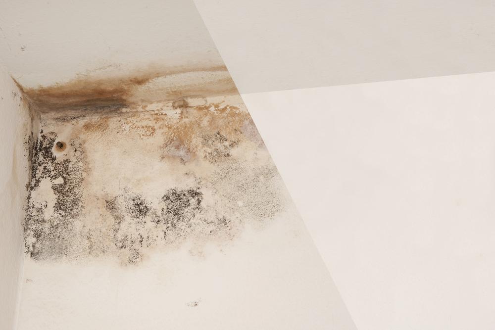 Traitement Condensation  Murs Humides  Abi