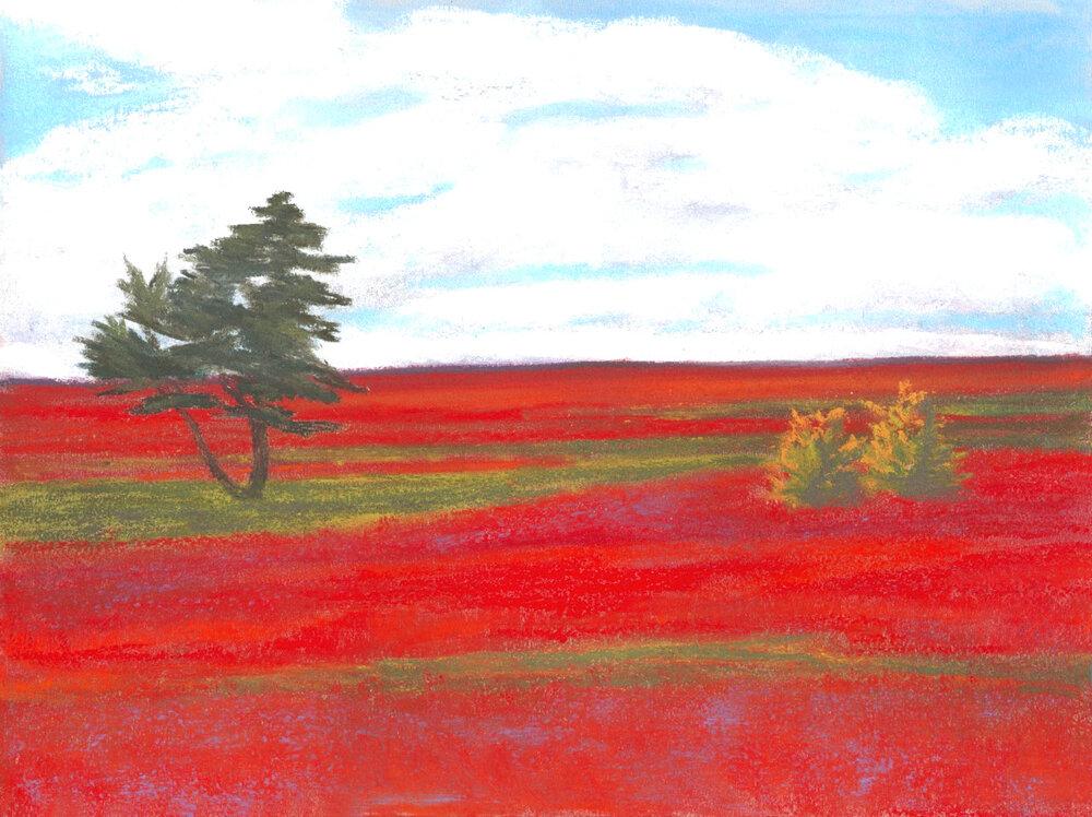 Red Barren