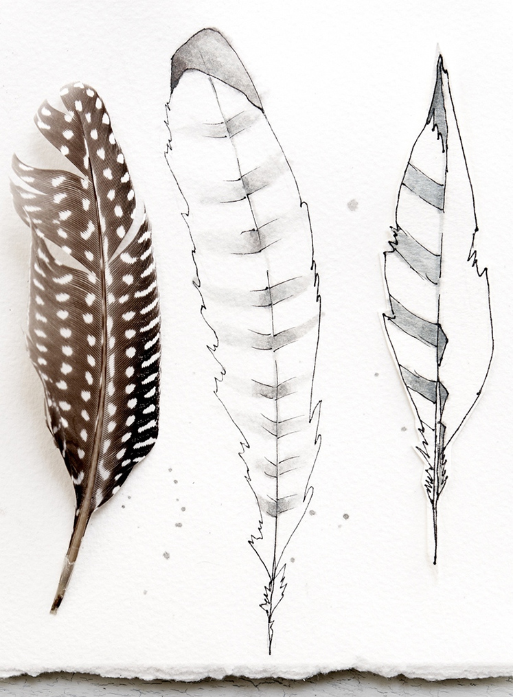 Feathers02.jpg