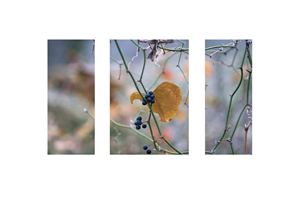 berriescon triptychweb.jpg