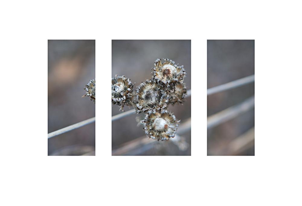 flower triptych sharpweb.jpg