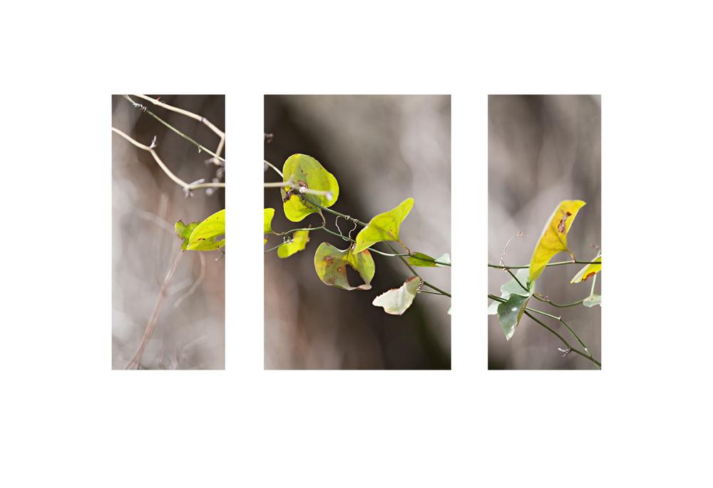 new vine triptychweb.jpg