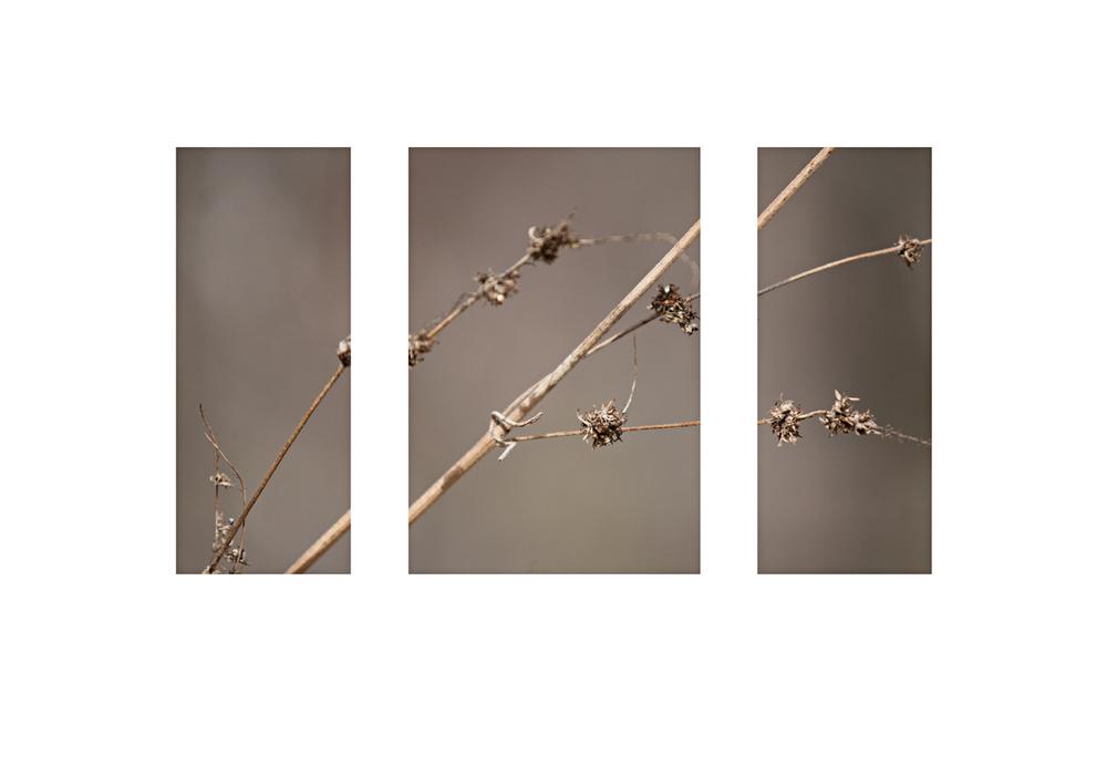 weed triptych sharpweb.jpg