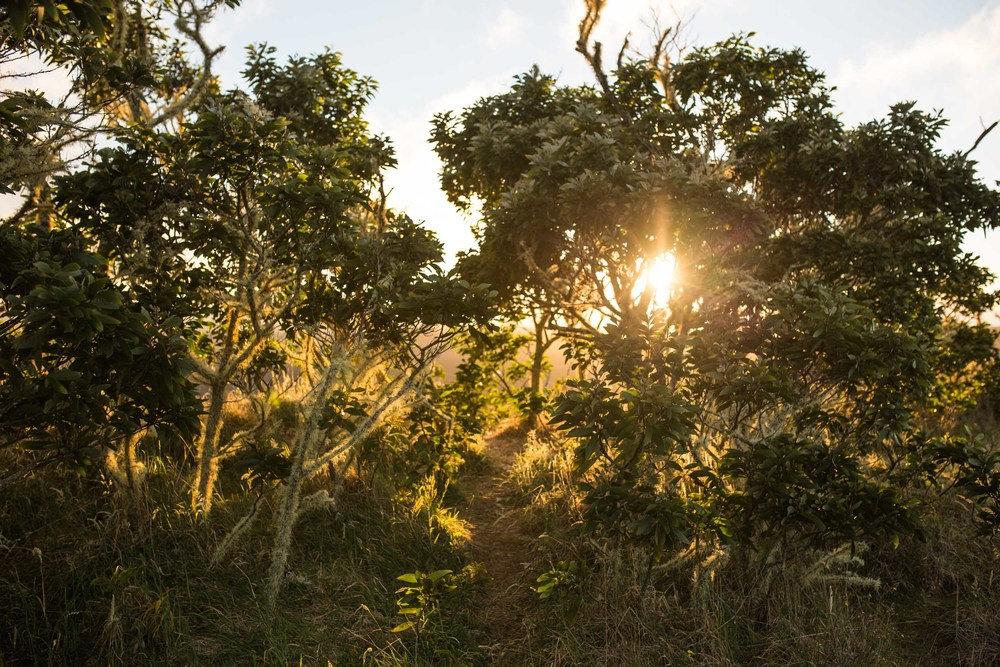 Kona Hawaii Lifestyle Photographers -Jono & Laynie Co.37.jpg