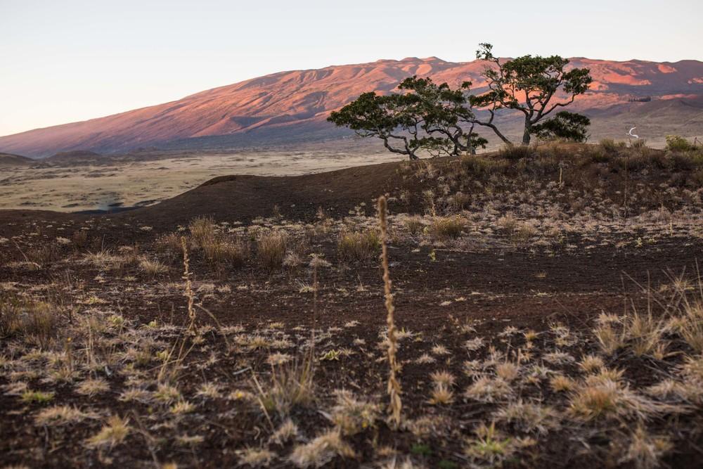 Kona Hawaii Lifestyle Photographers -Jono & Laynie Co.48.jpg