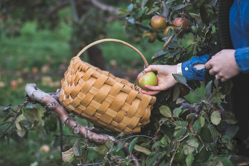 Myers Apple Farm Engagement Session086.jpg