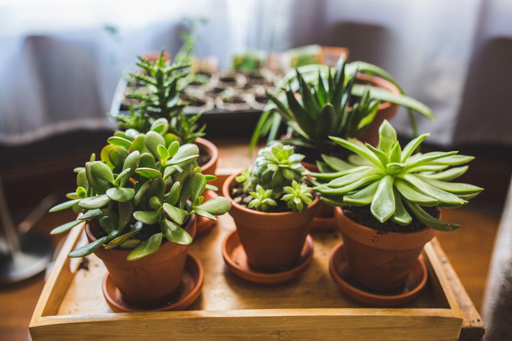 my plant babies.