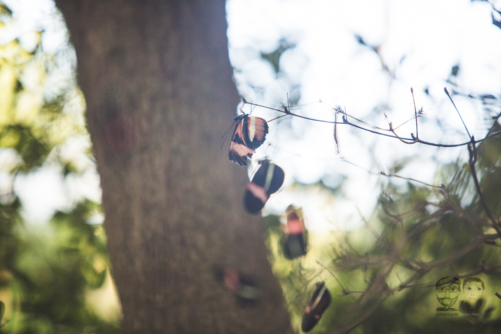 Butterfly Conservatory-JonoLaynie25.jpg