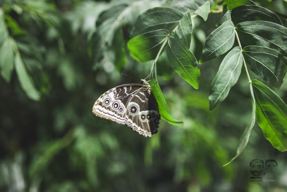 Butterfly Conservatory-JonoLaynie52.jpg