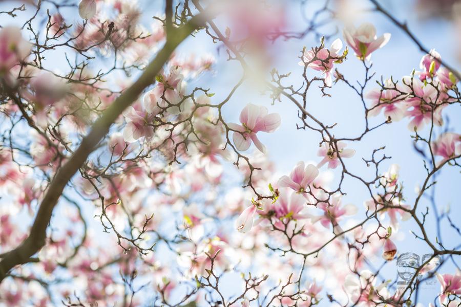 BrantfordPhotographer05-jonolaynie.jpg