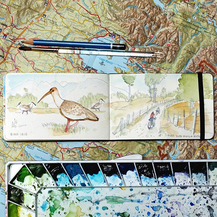 bird_ibis.jpg